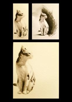 gatti compilation